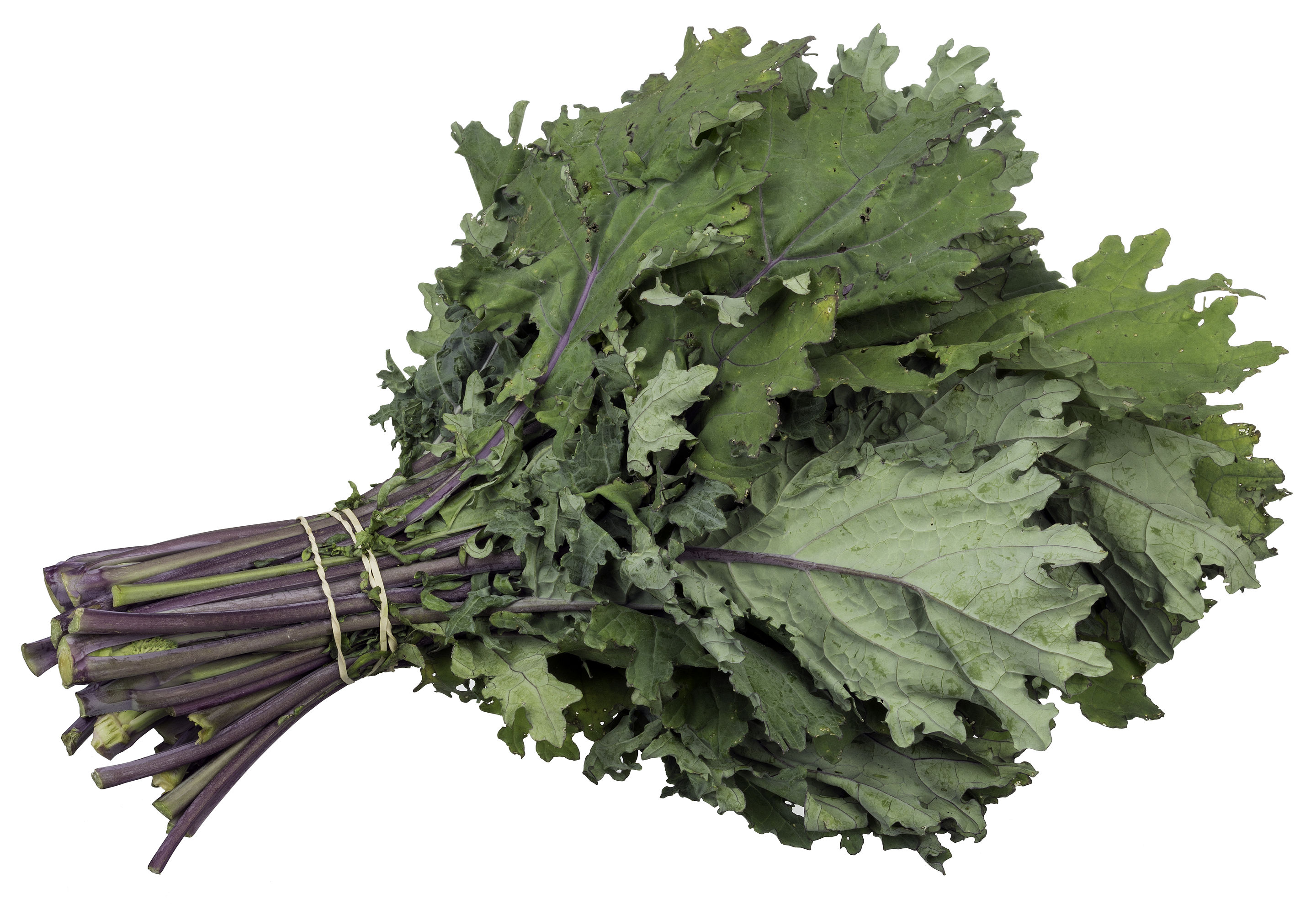 Leafy Green Vegetables are the new Nootropic? - Ecoja